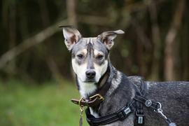 Portrait Hund