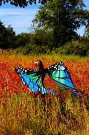 Mohnfeld Schmetterling
